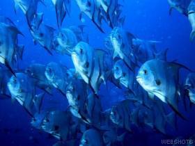peces.jpeg